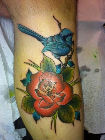blue-wren-bird-4