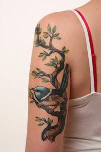 blue-wren-bird-5