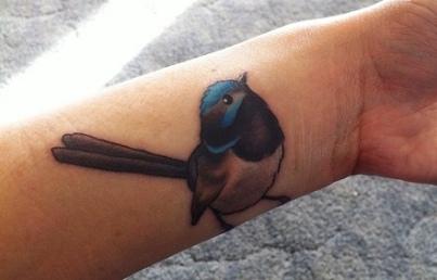 blue-wren-bird-6
